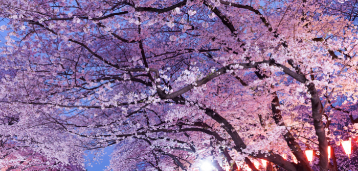Tradiciones en Japón